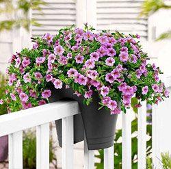 cvety-na-balkone-foto-i-nazvaniya-2
