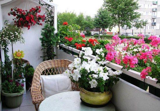 Для выращивания на балконе отлично подходят петунии