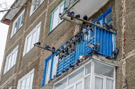 Прикормленные голуби