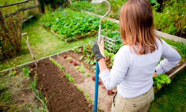 Основной график осенних работ в саду: октябрь и ноябрь