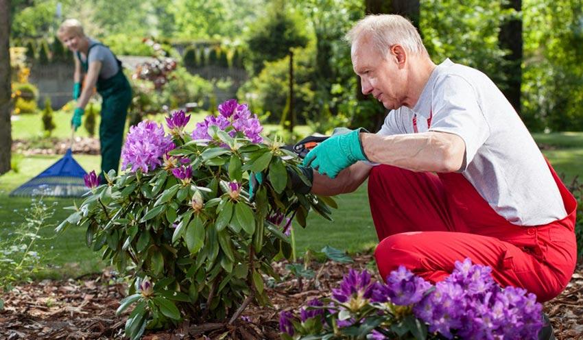 Необходимые работы в саду осенью