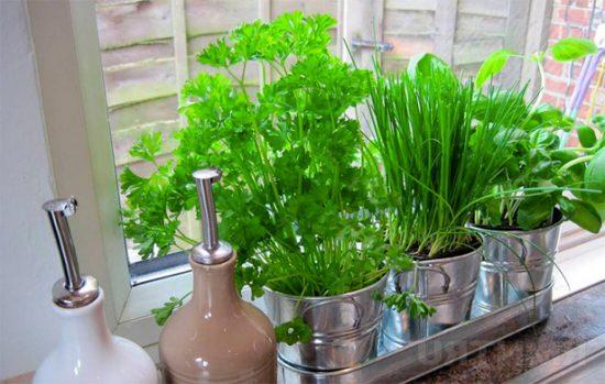 Выращивание зелени на подоконнике фото